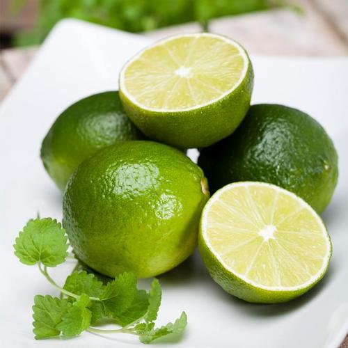 Grüner Limetten-Stamm, im ca. 20 cm-Topf