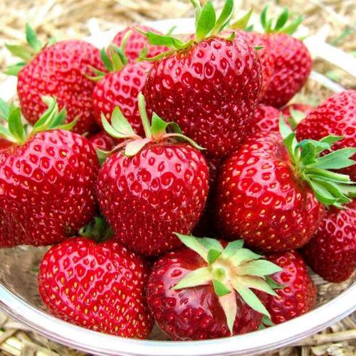 Erdbeere Rimona, im ca. 9 cm Topf
