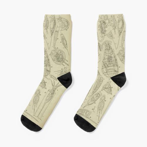 Mikroskopische Biologie Socken