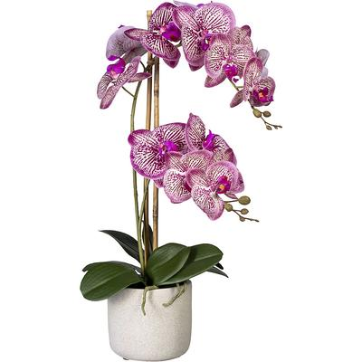 Phalaenopsis, Real Touch dans un...