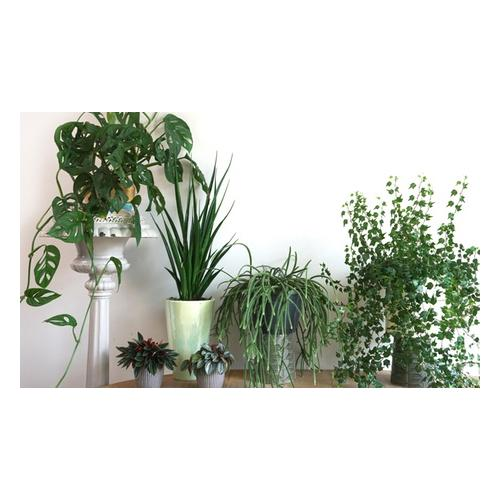 5er-Set Zimmerpflanzen
