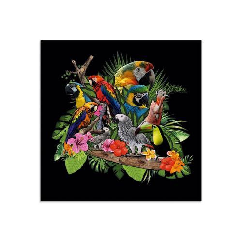 Artland Glasbild »Papageien Graupapagei Kakadu Dschungel«, Vögel (1 Stück)