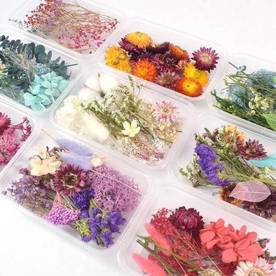 Boîte de vraies fleurs séchées n...