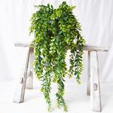 Vigne d'eucalyptus artificielle ...