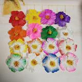 Fleurs de Hibiscus, 10 pièces, d...