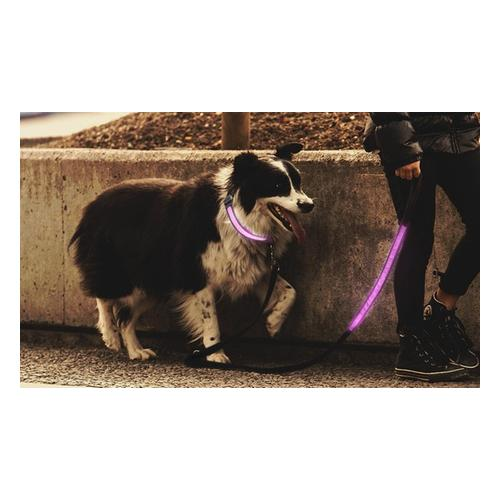 Leuchtendes Hundehalsband: Hundehalsband/ 1x Blau/ XL