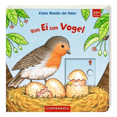 Kleine Wunder der Natur: Vom Ei zum Vogel