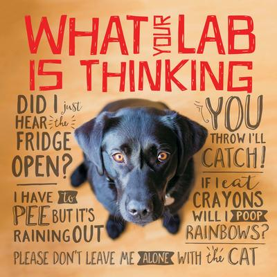 Willow Creek Press What Your Lab is Thinking Book