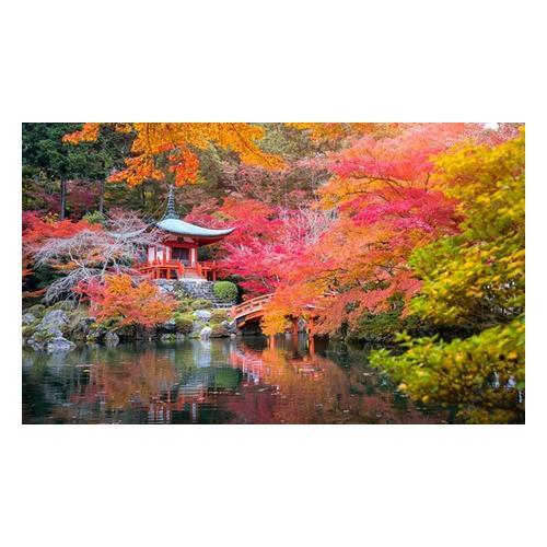 4er-Set Japanische Ahorne: Orange Dream