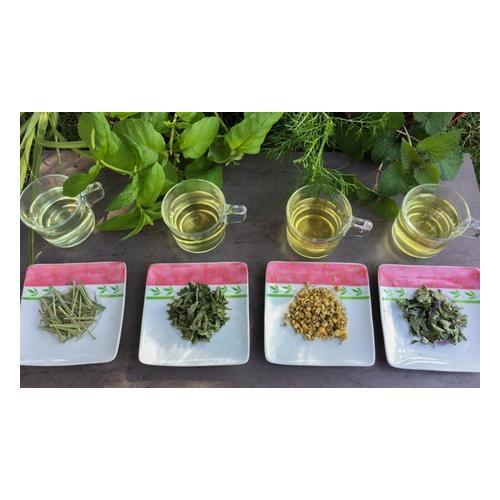 6er-Set Teepflanzen