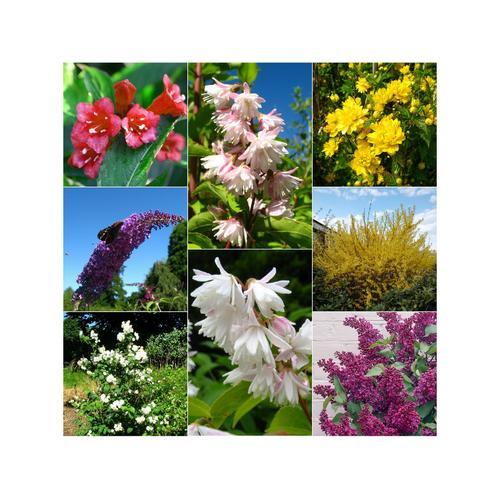 Blütensträucher-Sortiment: 8 verschiedene Pflanzen