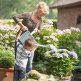 Garten-Hortensie Magical® Revolu...